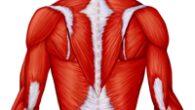 Grazie alla ginnastica posturale si possono, infatti,correggere gli squilibri presenti nell'apparato muscolo-scheletrico, fonte di dolori e disturbi che vanno dal mal di schiena alla cervicale, passando per molti altri fastidi, […]